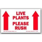 """3x5"""" Live Plants Please Rush Arrow Labels 500/rl"""